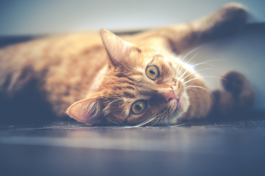 Characteristics of cat behavior